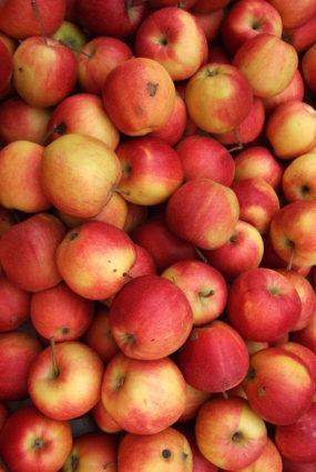 Āboli — nepamatoti aizmirsta veselības lādīte